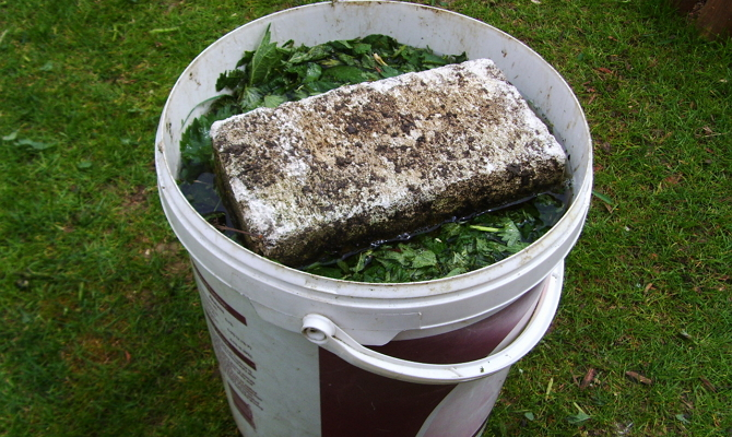Оригинальные рецепты подкормок – используем подручные средства