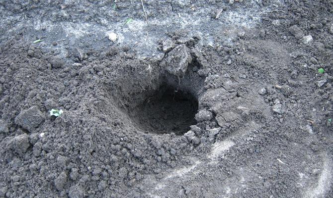 Посадка растения на дачном участке – какая почва нужна?