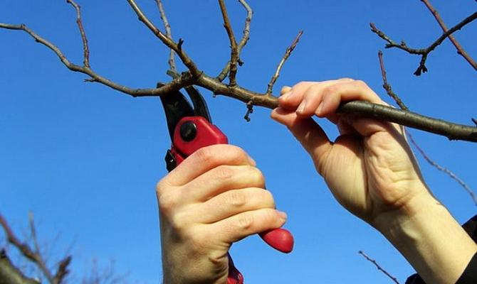 Лето, осень, зима и снова весна – кратко о каждом сезоне
