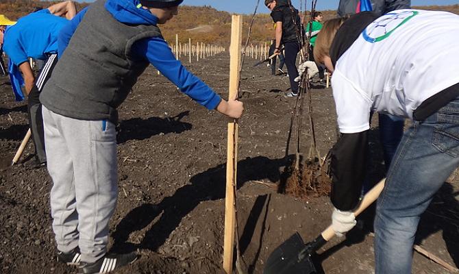 Подготовка посадочной ямы – изучаем секреты садоводов