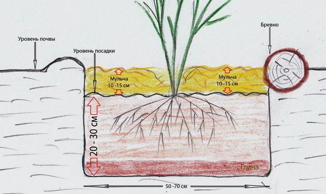 Где лучше поместить растение?