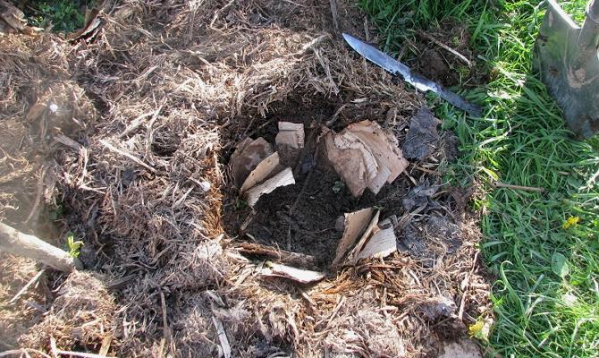 Важный этап – подготовка почвы к высадке кустов