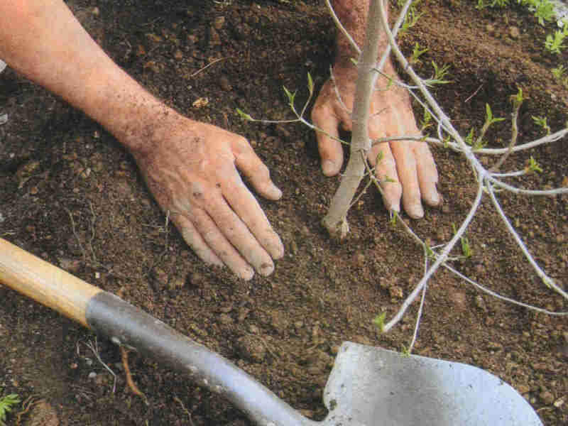Выбираем участок и сажаем дерево – все самое главное