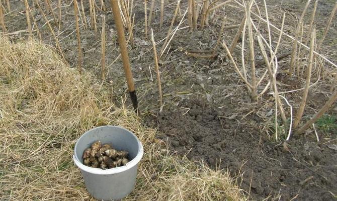Вспахиваем землю для посадки
