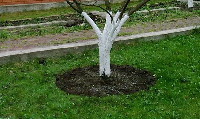 Рыхление почвы для обеспечения корней кислородом