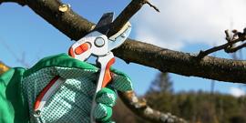 Как обрезать грушу осенью – собираем исчерпывающую инструкцию садоводу