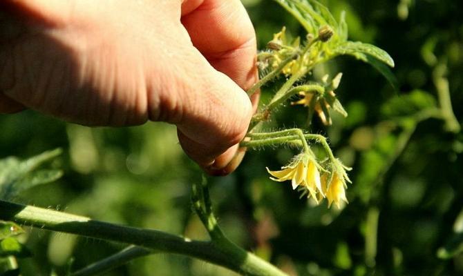 Формирование кустов – как получить хороший урожай?