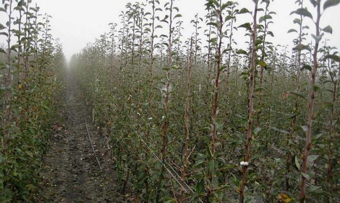 Когда сажать яблоню и как это зависит от региона?