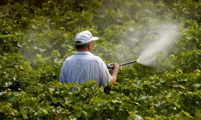 Борьба с заболеваниями, грозящими винограду