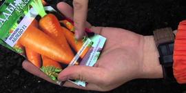 Посадка моркови или как получить сочные и сладкие корнеплоды?