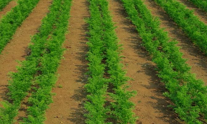 Работа с грунтом и процесс выращивания – от а до я
