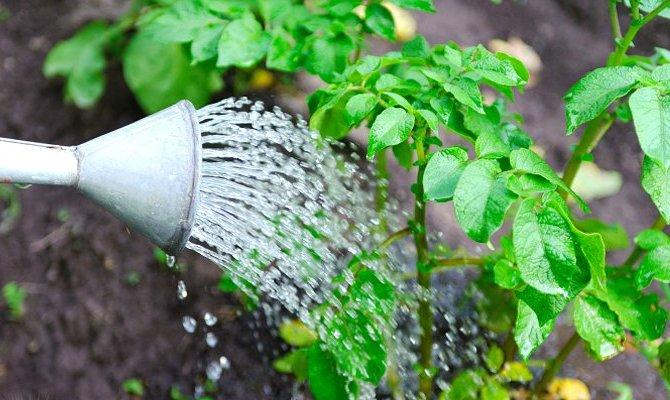 Поэтапное орошение – когда сокращать и увеличивать количество влаги?