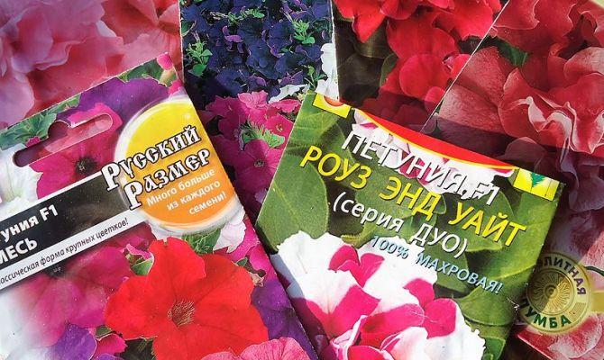 Типы петунии – как найти растение по вкусу?