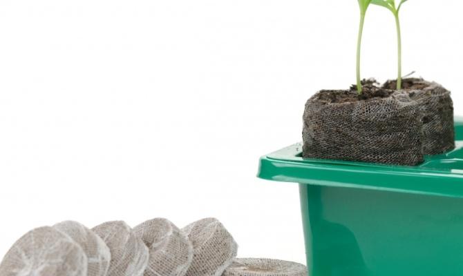 Посев петунии в торфяные таблетки