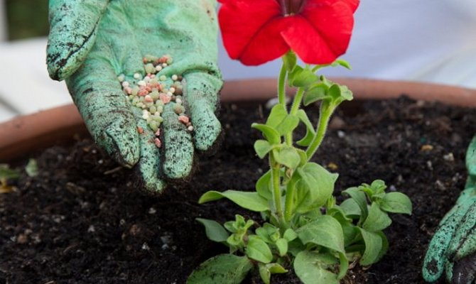 Полезные советы начинающим цветоводам