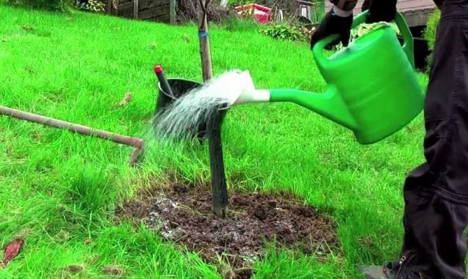 Тщательный уход за яблоней – залог больших урожаев