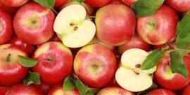Яблоки сорта Уэлси – зимний гость вашего сада