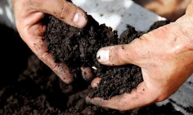 Подготовка почвы, семян и емкостей под рассаду