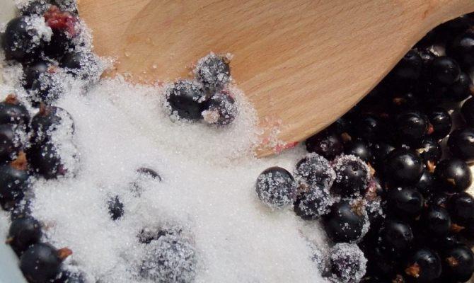Рецепты протертой смородины, смешанной с сахаром