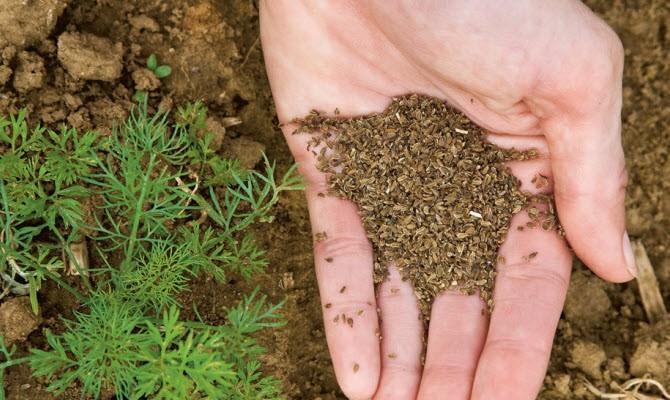 Сроки посадки весной – обеспечиваем себя овощем на весь год