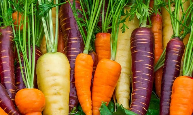 Когда сажают морковь, и какие есть сорта?