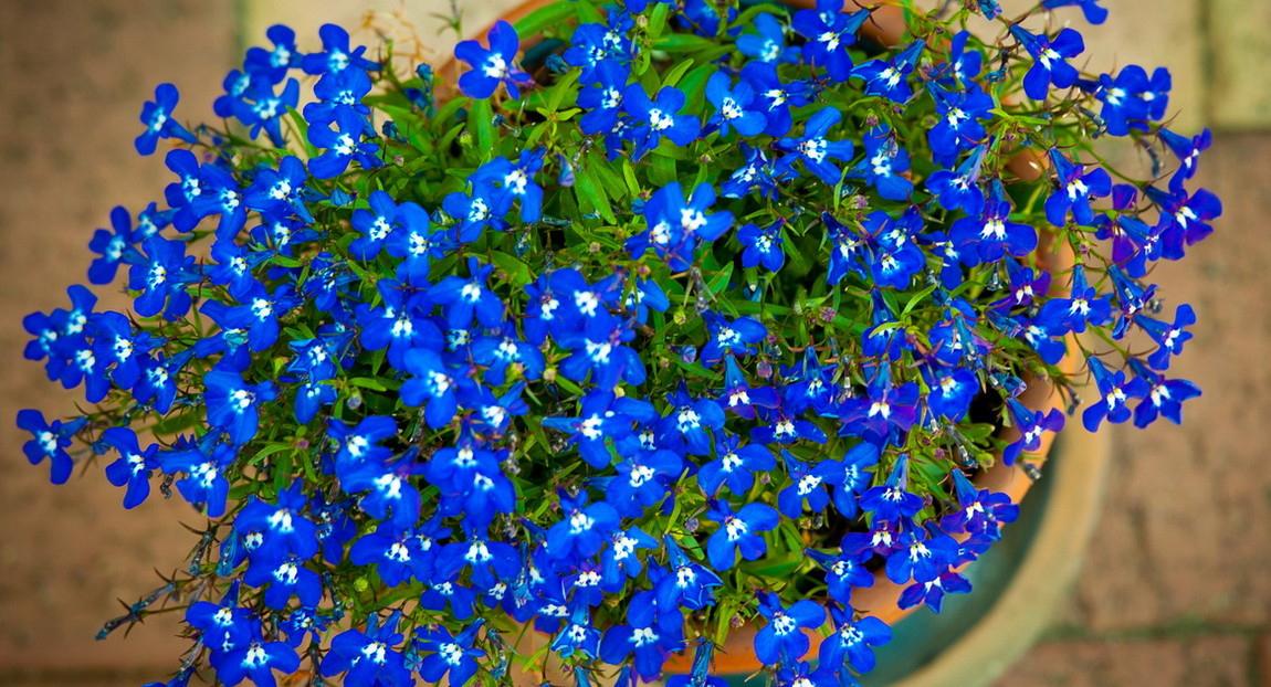 Календарь цветовода на январь – какие цветы посадить на рассаду в январе для цветения ранней весной, 12 названий