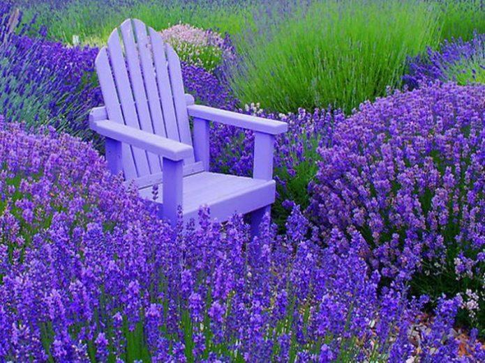 Фиолетовое кресло в лавандовом саду
