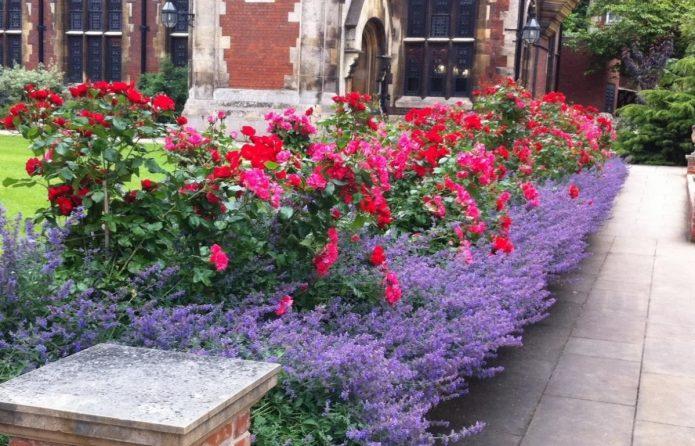 Лаванда и розы