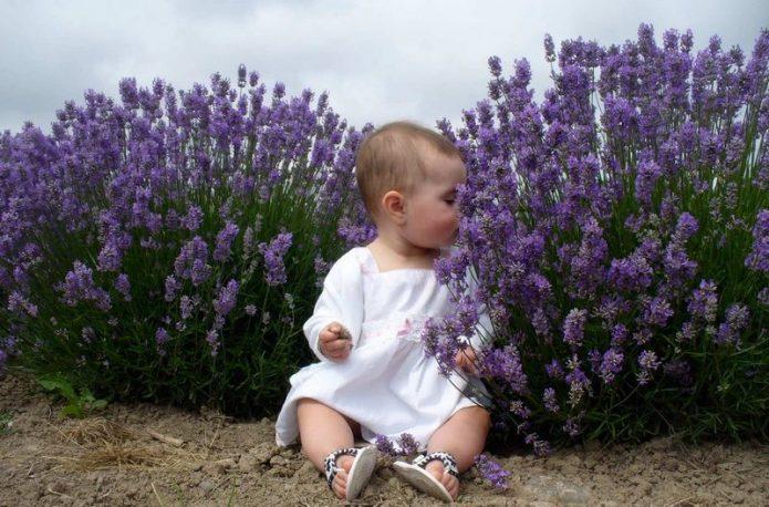 Ребенок сидит в кустах лаванды