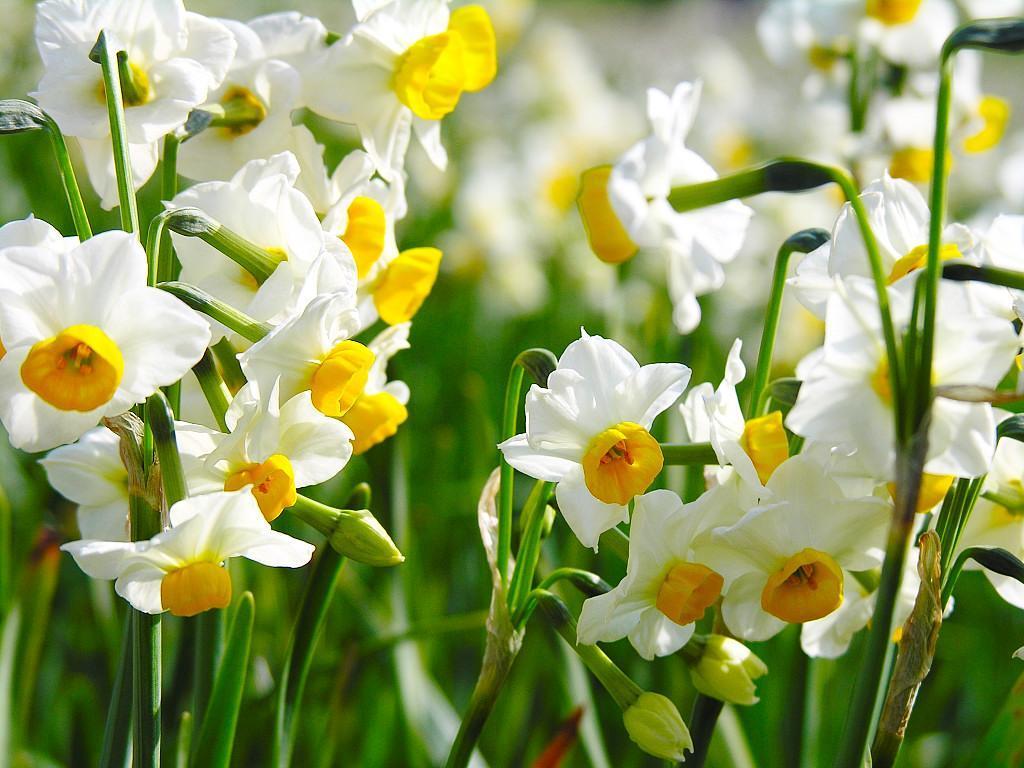 цветы цветущие в мае фото и название нашего