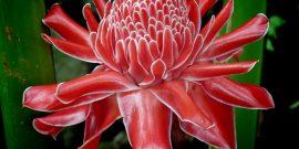 Весенние цветы со всего мира: фотоподборка от пользователей Инстаграм