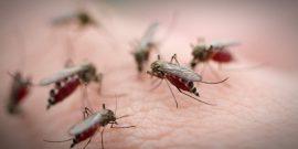 Как защититься от комаров: видео
