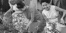 Тест: Смогли бы вы вести огород в СССР?