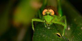 Тест: Угадай насекомое по картинке