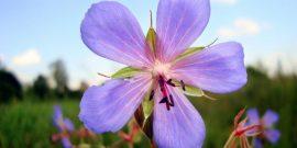 Тест: Угадай название цветка по картинке