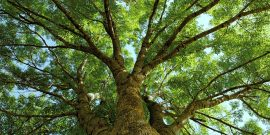 Тест: Какое дерево подходит вам по характеру?