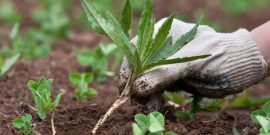 Как избавиться от сорняков в грядках: эффективные способы без прополки, видео