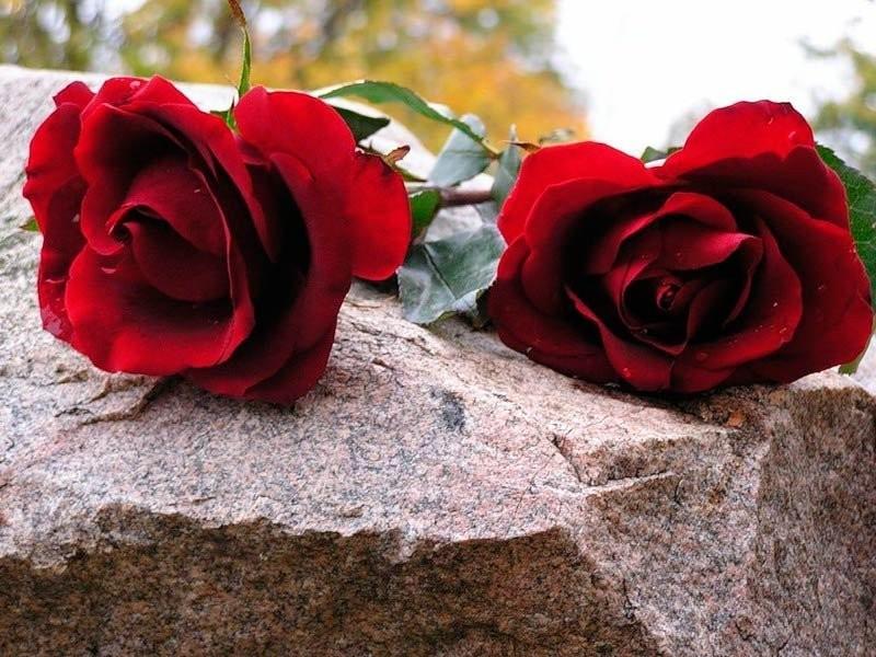 Открытки цветок в память
