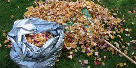 6 причин, почему ненужную листву на участке стоит превратить в перегной