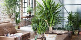 Что нужно комнатным пальмам, чтобы и зимой дома был тропический рай