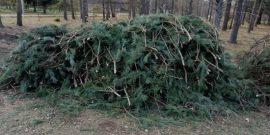 Как не получить штраф, собирая лапник в лесу