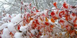 Почему деревья так и не сбросили листву к зиме