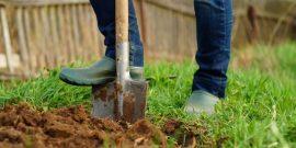 5 последствий, к которым нужно готовиться, если вы забыли перекопать землю под зиму