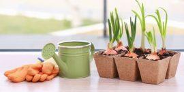 4 «вечных» овоща, которые можно пересадить с грядки в домашние горшки