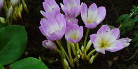 10 растений, которые опасно сажать на даче