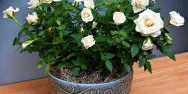 Что посадить на подоконнике, чтобы дома всегда приятно пахло