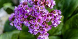Какие растения нельзя обрезать на зиму, иначе они потом не зацветут