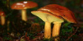 Какие грибы можно вырастить на даче