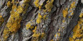 Эффективные способы борьбы с лишайником на деревьях