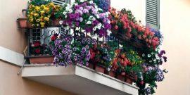 Когда холода не беда: помогаем балконным растениям выдержать любой мороз